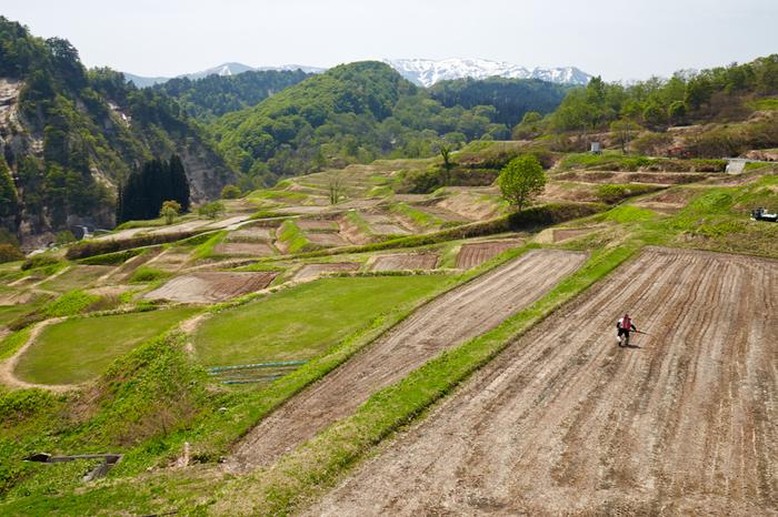 約120ヘクタールもの面積を誇る四ヶ村棚田は、「日本の棚田百選」にも選定されています。ここでは、どの角度から眺めても、古き良き日本の里山の風景が広がっています。