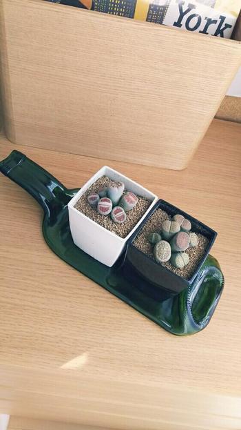 観葉植物用のプランターとしてもとってもおしゃれ!土のいらないエアープランツを置いてもいいですね。