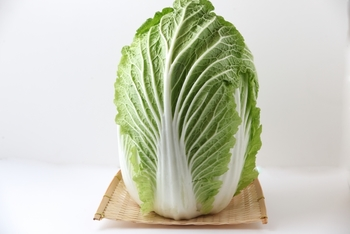 """白菜の保存のポイントは""""立てて""""置くこと。"""