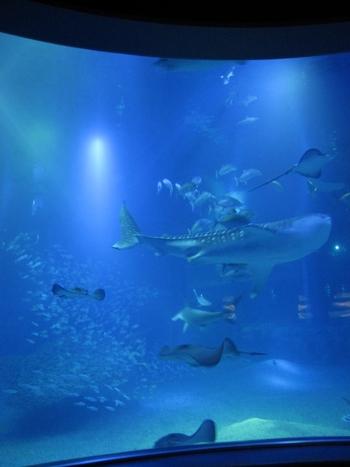 「すべてのものは、つながっている」というテーマで表現された海遊館の命の世界。環太平洋の海を再現した巨大水槽では、人気のジンベイザメが悠然と泳いでいます。