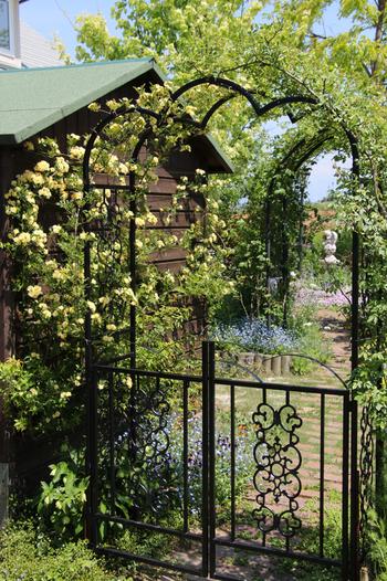 自宅にこんな美しいアーチがあったら、モッコウバラの花の時期には思わずゲストをたくさん呼んでしまいそうです!