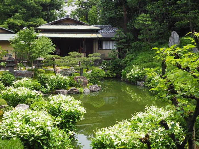 """通常は非公開ですが、半夏生の開花時期になると""""半夏生の庭園特別公開""""として一般に開かれます。 両足院には、三つの庭園がありますが、その中の一つである池泉回遊式庭園は「半夏生の庭」と呼ばれ、初夏に半夏生が一斉に咲き開き見頃を迎えます。 【画像は、池泉回遊式庭園内。池を中心に園路が設けられ、北側には庭が眺められる二つの茶室があります。】"""