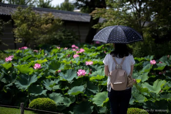 """京都は、""""花の都""""。 風雅に、優雅に、都の景色を彩るのは、季節に咲く花々。  歌に詠まれ、着物に写され、菓子に象られ。 花無くしては、京の文化、日本の文化は、これ程までに成熟しなかったかもしれません。  色も。形も。儚げに散りゆく様も。 花は、一心に咲くことで、私たちに様々な気づきを与えてくれます。  【「東寺」の蓮】"""