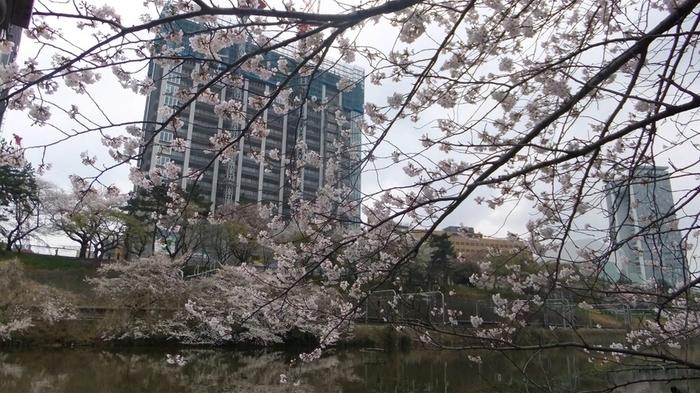 都心にありながらも、緑がいっぱい。ウッドデッキで雰囲気のある食事を楽しめます。春になると、お堀に咲き誇る桜が目の前に広がります。