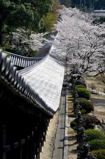 本殿へと続く廻廊は、自然の地形を活かし建てられています。天正7(1579)年に再建されたこの廻廊は県の重要文化財に指定されています。