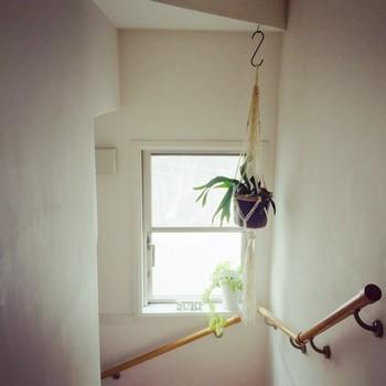 シンプルな白い空間や飾り物が置きにくい階段の踊場も、プランツハンガーを吊るすだけで、自然の優しさあふれる空間に変わります。