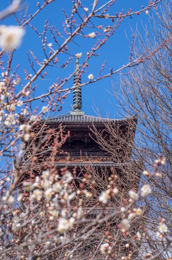 備中国分寺は、741(天平13)年に聖武天皇の命によって全国に創建された国分寺の一つ。ちょうど、吉備路の中間に位置しています。現在の建物は、江戸中期に再建されたもので、本堂を含む境内全域は、国の史跡に指定されています。国の重要文化財の五重塔は県内で唯一。高さは凡そ34mです。