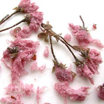 ご飯やスイーツに添えるだけで一気に春になる桜の塩漬け。お花見弁当にも是非取り入れたいですね。