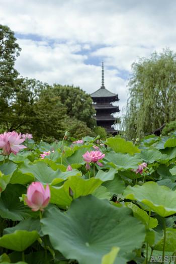 平安遷都とともに建立された、真言宗の総本山「東寺(とうじ)/教王護国寺(きょうおうごこくじ)」は、京都のランドマーク的シンボル「五重塔」で、よく知られる世界遺産の寺院です。