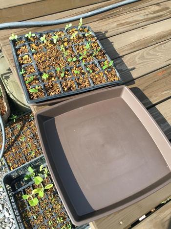 自分で育てた野菜を収穫して食べるってとっても満たされて贅沢なことですよね。種の種類も多いこの季節!今年はベランダを利用して栽培を始めてみませんか?今回は初心者でも育成できるベランダ菜園をご紹介したいと思います。