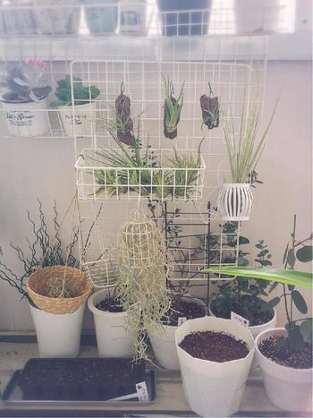 それでは早速、春から蒔いて収穫できる野菜たちの栽培方法をご紹介したいと思います。