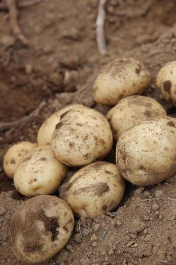 もう一つのオススメポイントとは、農園の収穫体験や各種クラフト体験ができること。採れたての野菜を使って野外料理を楽しむというのも、おすすめです。