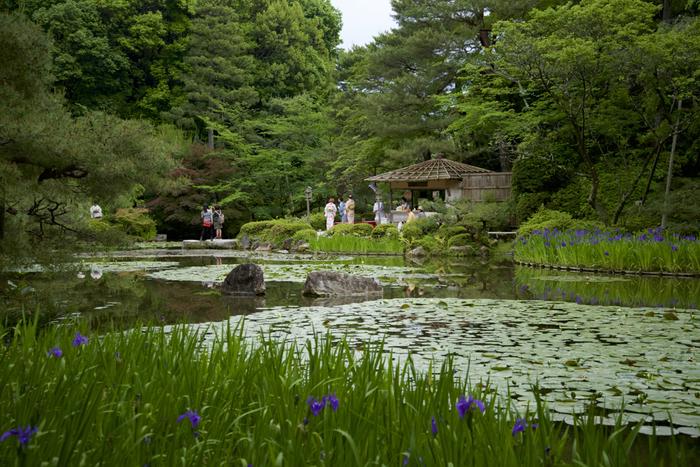 「神苑」は、春の枝垂れ桜が特に有名ですが、陽射し眩しい頃も、素晴らしい花景色を眺めることができます。中神苑と西神苑では、季節になると豊かな緑を背景に、杜若や花菖蒲、睡蓮が、池を中心にして次々と花開きます。その眺めは、名勝庭園ならでは、京都ならではの、粋で通好みの花景色です。【杜若が美しい頃の「中神苑」。画像奥は、お休み処の東屋。】