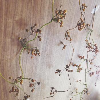 華やかで美しいバラは、品種によってはルビー色のきれいな実がなります。バラの実はローズヒップと呼ばれ、お茶として飲むこともできます。