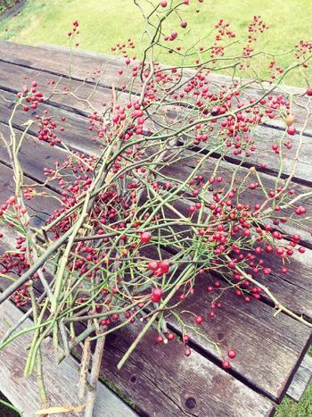 初夏に真っ白な花を咲かせる野いばらは、秋になると可愛らしい真っ赤な実をつけます。時間とともにやや色あせますが、ドライにして長く楽しむこともできます。