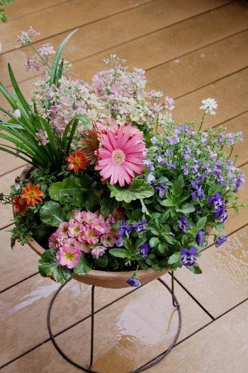 冬〜春バージョン。冬に汚くなった植物をいくつか取り除き、間にちょっと春らしいピンクを入れていきます。こうして季節の変わり目も少しずつ変えていけばナチュラルです。丈が伸びてきた植物はカットするとまとまりが良くなります。