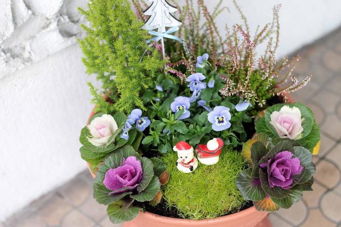 シンプルながらクリスマス気分が高まるちょっとした飾りを寄せ植えに。