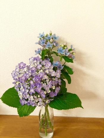 大きな紫陽花などの花は1、2本ずつ瓶に飾るとちょうどよいふんわり感が出ます。