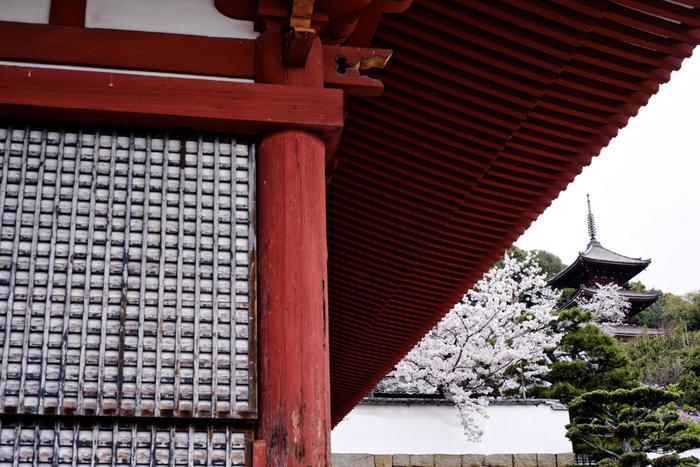 西國寺は、新春の火渡り神事、桜の名所として有名な尾道を代表する寺の一つ。寺社巡りなら外せない名刹です。 【画像手前が金堂(重文)、右奥が、足利六代将軍・義教によって建立された三重塔(重文)。】