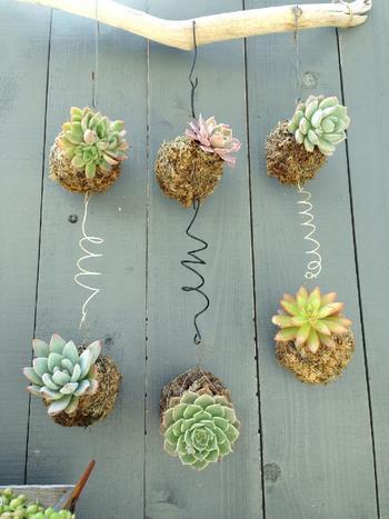 こんなポップな飾り方もあるんですね。とても可愛らしい♪お庭の板塀にディスプレイする斬新なアイデアです。