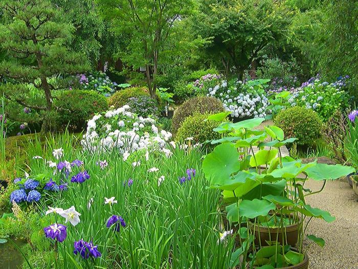 由緒ある寺院ですが、荒廃復興を繰り返した歴史があり、現在の庭園は、昭和43(1968)年からの発掘調査によって復元されたものです。初夏の頃は、池周囲の散策路に紫陽花が咲き乱れ、杜若や花菖蒲が水辺を彩ります。