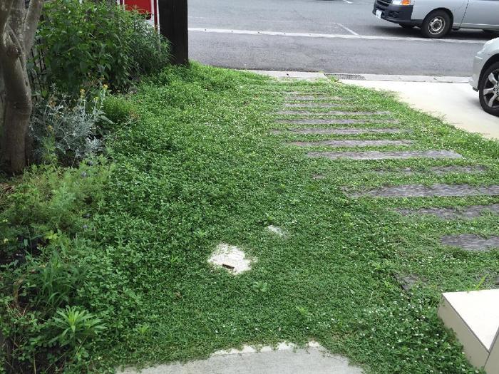 芝生の代わりにグランドカバーになる植物を植えると、地面を覆ってくれるため雑草が生えてこなくなります。こちらの植物はほとんど手入れ不要で、5月~10月ごろには小さな花も咲くイワダレソウ。枕木ともとっても相性がいいですね。