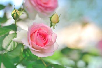 庭には美しい薔薇の姿も♪