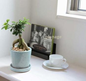 こちらはガジュマル。妖精の住む木と言われていて、幸せの樹とよばれています。窓辺にお気に入りのアートブックと一緒にディスプレイ。