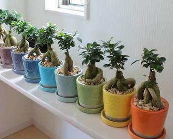 色違いのポップなカラーの鉢に入れて壁横並び一列にディスプレイするのも素敵。