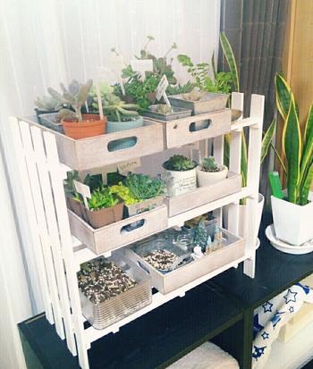 100円均一のすのこを白くペイントして棚を作ったのだそう。お店のようにディスプレイされて多肉植物たちが収まっている様子が可愛らしいですね。
