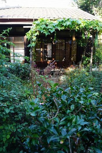 ヘチマは正岡子規に愛された植物です。東京 谷根千にある子規庵では今もヘチマ棚が見られます。咳や痰にも良いとされるヘチマ水とともに、青々とした大きな葉陰や大ぶりの花は病床の子規を慰めたことでしょう。 他にもたくさんの夏の花々が咲き乱れ、都内ながら自然がかおる涼やかなお庭が見られますよ。