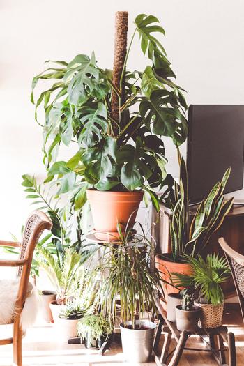 「インドアガーデン」とは家の中に現れる緑に囲まれた異空間を演出した部屋のこと。 緑は人の心を癒して、リラックスさせてくれます。