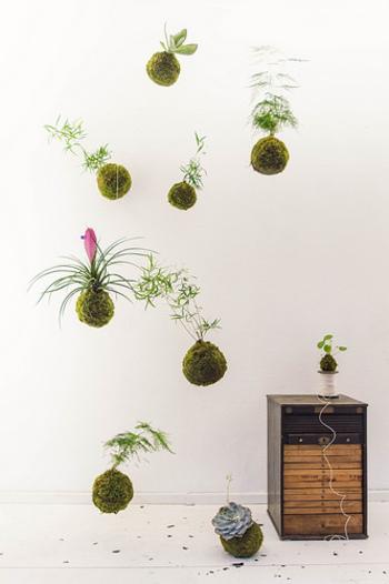 苔玉は、天蚕糸や麻紐を使って上から吊り下げても素敵です。
