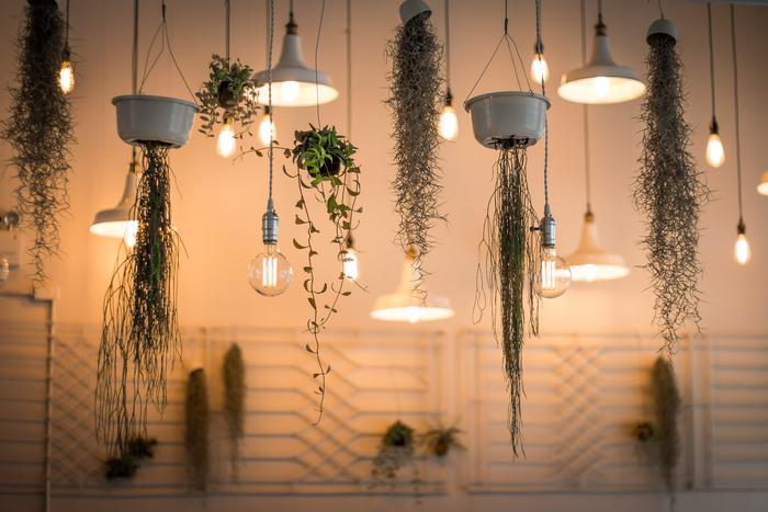 裸電球など照明とともに植物を天井から吊るせば、植物も照明の一部に。