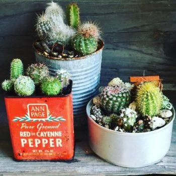 いろいろな種類を寄せ植えするのもオススメ。鉢だけでなく、アンティークの缶などに植えると雰囲気のあるインテリアになります。