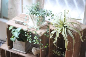 ミニグリーンなどの植物をプラスして、心がほっこり和める。そんな癒しの空間をつくってみては!グリーンがあると、やっぱり心が落ち着きますよね。