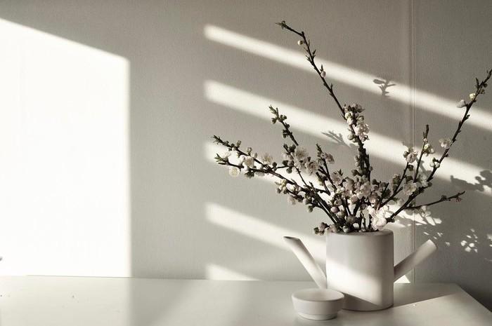 枝もののお花を飾るとき、光と影を大切にすると空間全体を大きく使って魅せることができるようになります。