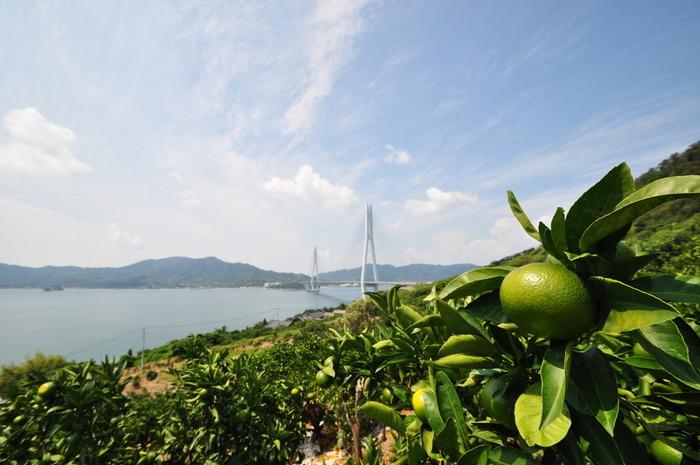 生口島(いくちじま)は、全国有数の柑橘産地。国産レモンの発祥地として知られています。観光スポットは「耕三寺」や平山郁夫美術館等。 【画像は生口島から望む多々羅大橋。】