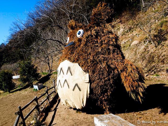 大迫力!!埼玉県比企郡の都幾川にトトロの森があるのをご存知でしたでしょうか?「どんぐり山」という名前で、この大きなトトロが出迎えてくれます。