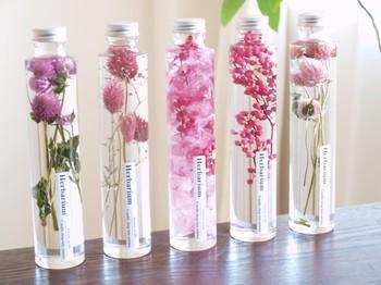 こちらはハーバリウムという液浸標本です。お花のかたちや色を鮮やかに保存できるとあって、プレゼントとしても喜ばれるものです。季節のお花を並べて、理科室の気分を堪能してみましょう。