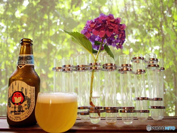 グリーンカーテンが作る緑陰で、休日のランチビール。パラダイスですね~(^.^)