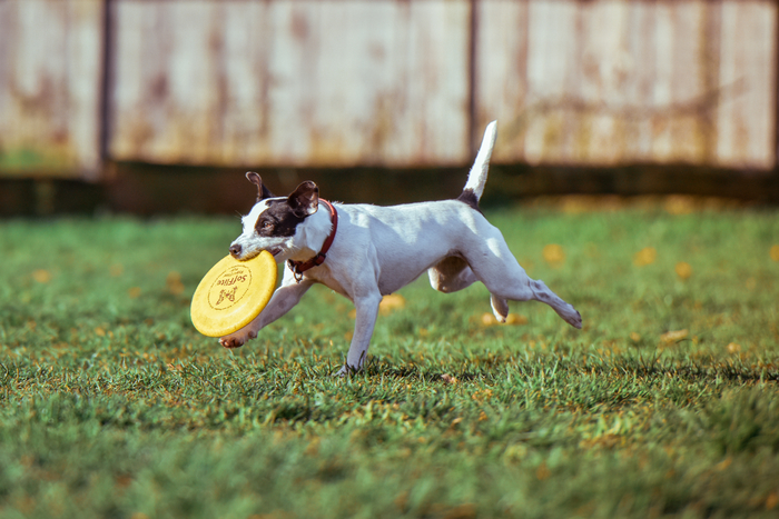 動物の営みや子どもの運動会など、早い動きを捉えるときは、シャッタースピードを早くします。