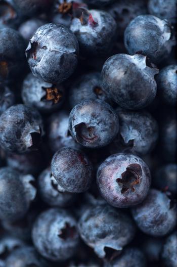 いよいよ収穫。艶めく濃いブルーの中にはジューシーな果肉がたっぷり。次々に食べ頃を迎える実を堪能しましょう。 熟期も品種によりますが以下の期間が目安です。  ハイブッシュ系:6月~7月中旬 サザンハイブッシュ系:6月中旬~7月下旬 ラビットアイ系:7月中旬~8月下旬