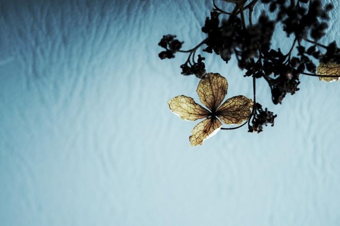 バラの花などのドライフラワーと違って、あじさいのドライフラワーは主張しすぎず、可憐さの中にどこか儚げな雰囲気を併せ持っています。