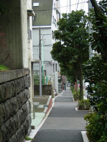 """さらに善光寺坂は、""""坂道の道の真ん中に神が宿る""""という素敵なエピソードで知られる、椋(わく)の老木も残っているのだそうです。"""