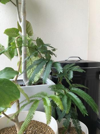 シンプルかつレトロなデザインは、観葉植物と並べて置いても違和感ナシ。