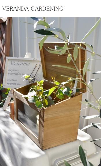 木の小箱はフタを開け、あふれる枝葉を覗かせて。まずはベランダの片隅に、小さくグリーンコーナーを作りませんか?