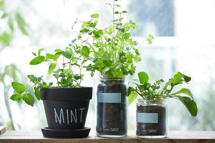 まずはミントやパセリなど、簡単なハーブを小さな鉢で窓辺で育ててみましょう。見た目も爽やかで、必要な時にすぐにお料理に使えるのも便利です。苗からなら手軽にはじめられそうですね。
