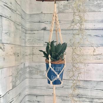 装飾的にひもを編む人気のマクラメ編みでハンギングを楽しみませんか?こんな風に鉢植えもユニークに飾ることができますよ。