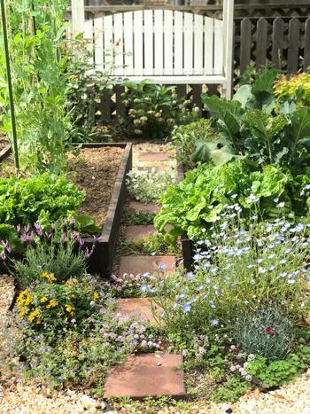 良い組み合わせも悪い組み合わせも、ここでご紹介しきれなかったものがまだまだたくさんあります。  コンパニオンプランツは味や虫の予防だけでなく、空間を上手に使う工夫にも長けています。家庭菜園に嬉しいコンパニオンプランツのポイントを抑えて、賢く楽しい庭づくりを楽しんでみてくださいね。